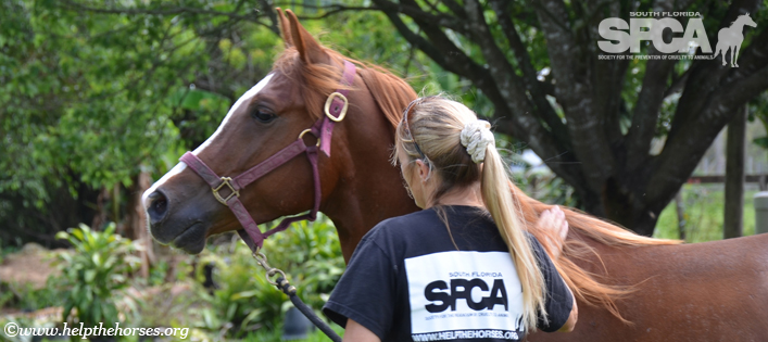 Honoring South Florida SPCA Founder Laurie Waggoner on her 50th Birthday