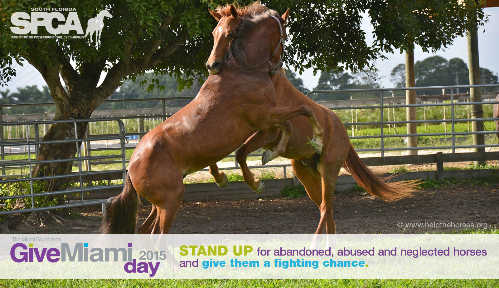 Stand Up for the Horses on Give Miami Day