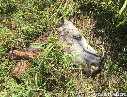 Horse Found Brutally Butchered in SW Miami Dade
