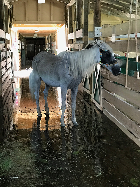 SFSPCA Assessing Damage to Facility, Condition of Rescue Horses & Seeking Alternate Facility