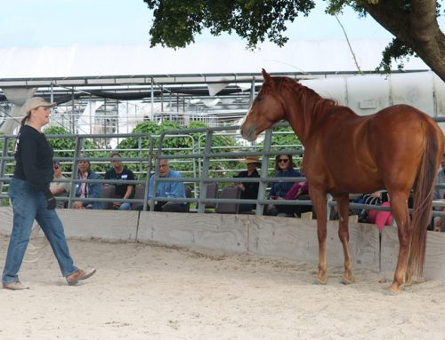 Members and Volunteers Meet and Learn at SFSPCA Rescue Ranch