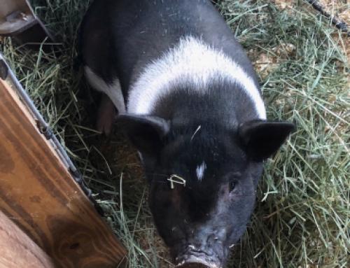Test Pig