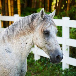 South Florida SPCA Horse & Livestock Rescue
