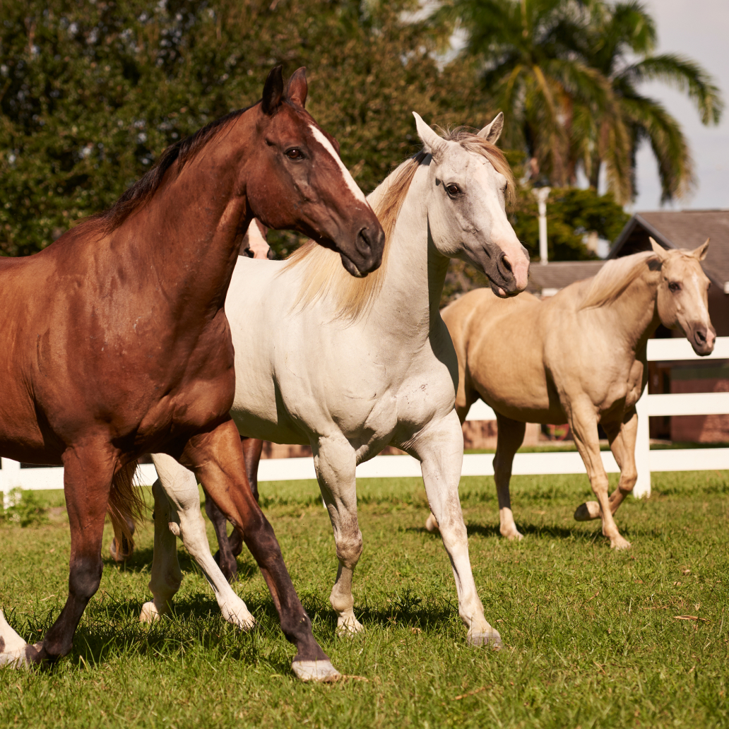 horsesWalking_eventImage