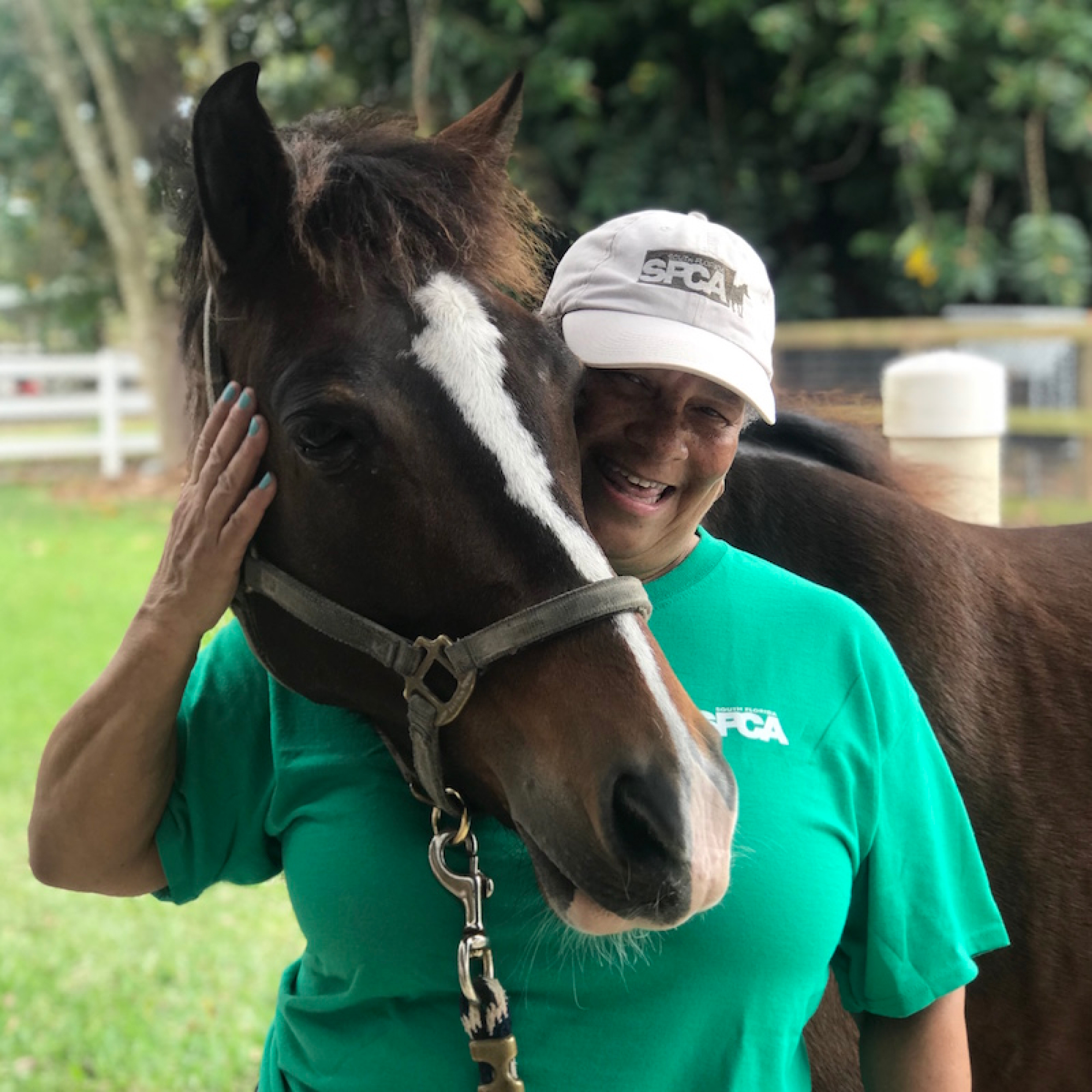 Volunteer at the South Florida Society for the Prevention of Cruelty to Animals