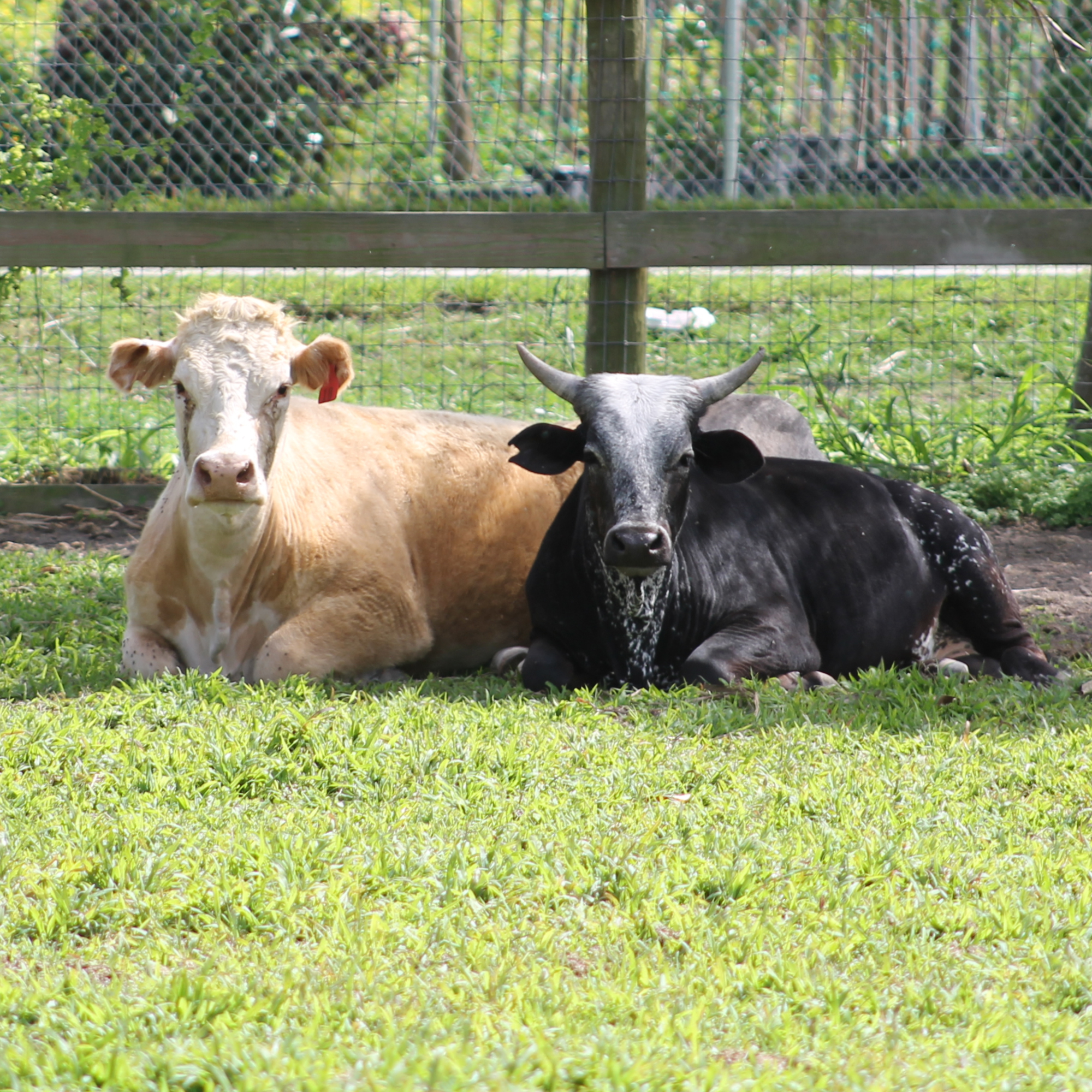 SFSPCA helps neglected and abandoned horses and other large livestock animals