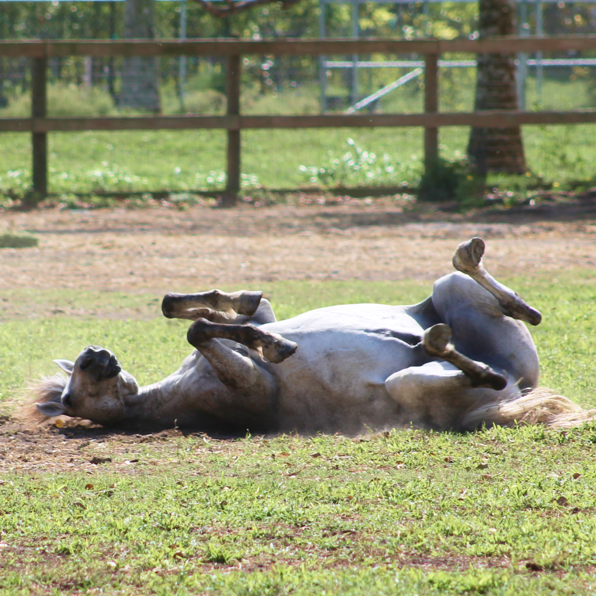 South Florida Society for the Prevention of Cruelty to Animals - Rescues Horses