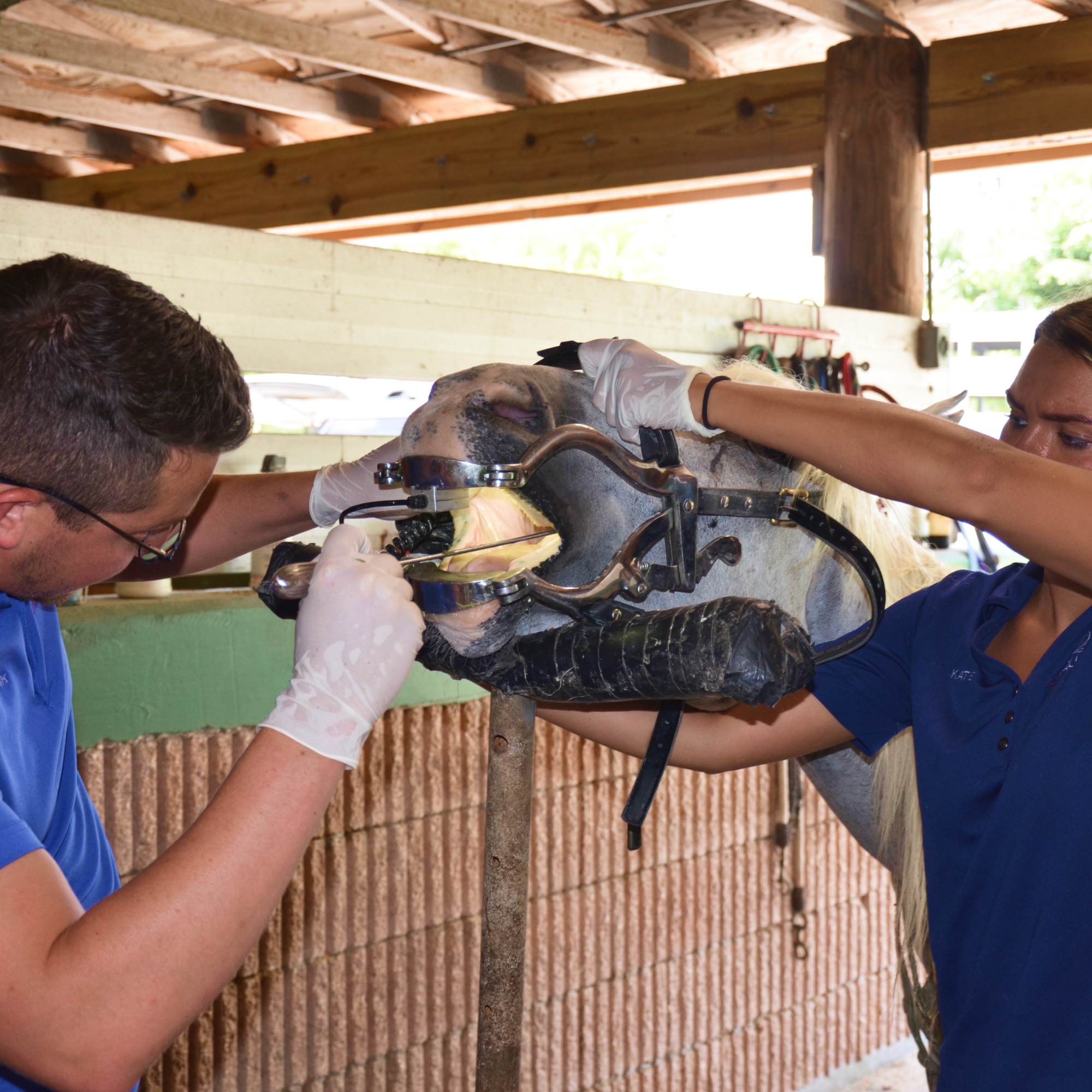 Dental Work at the South Florida Society for the Prevention of Cruelty to Animals