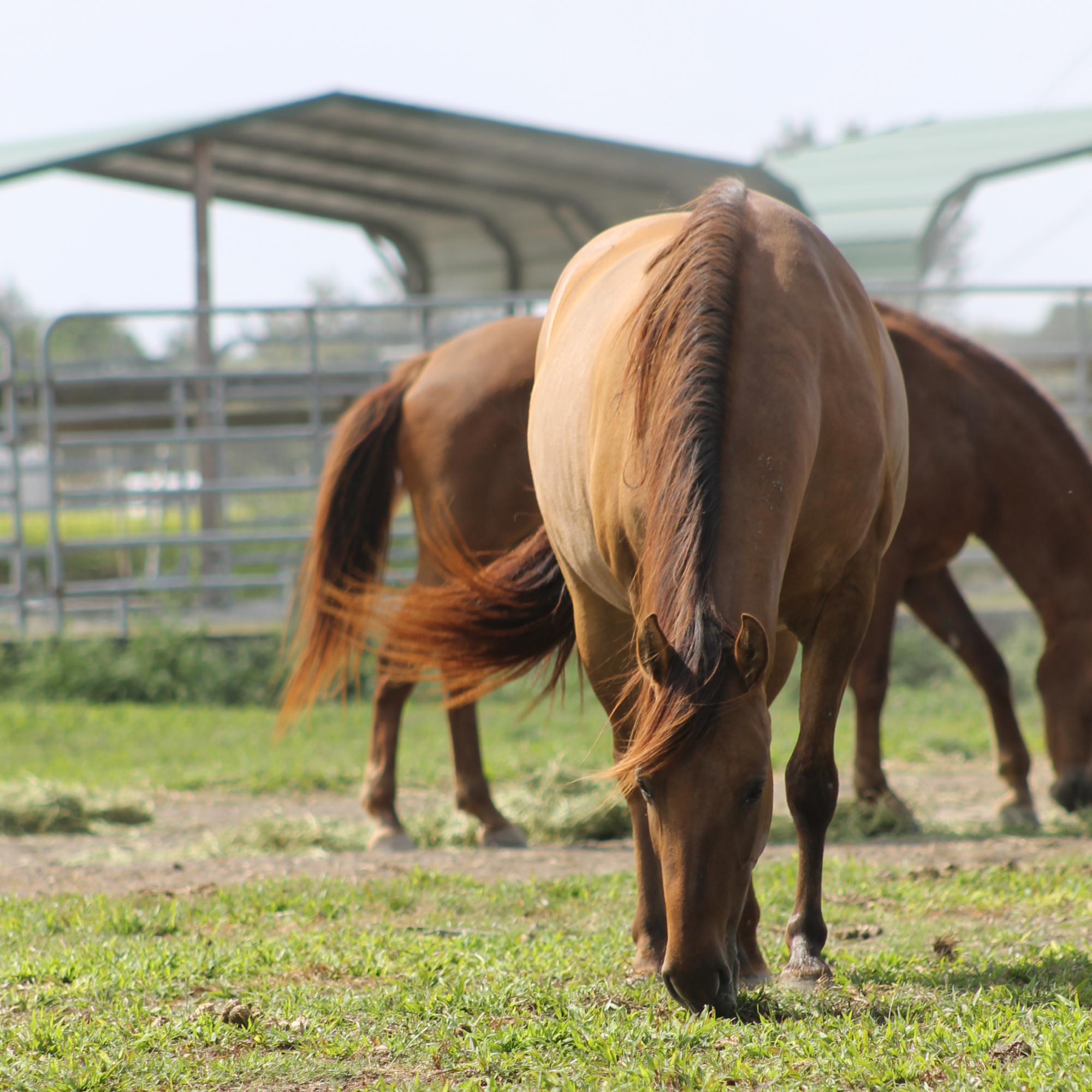 South Florida SPCA rescues horses and livestock from a lifetime of neglect and mistreatment