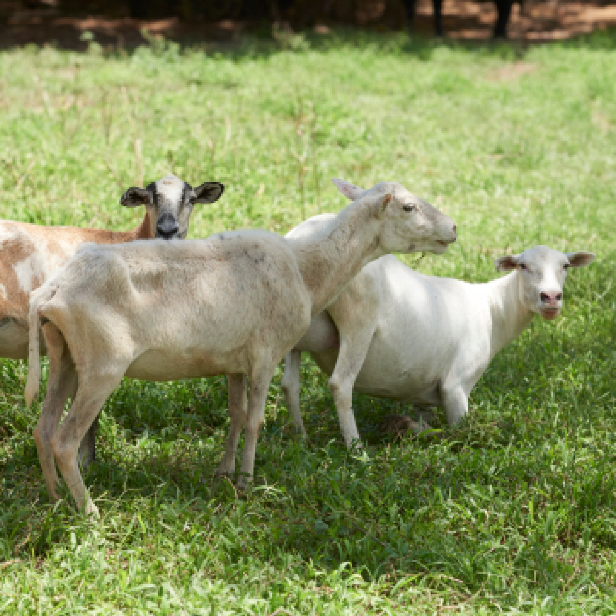 Livestock rescues in the field