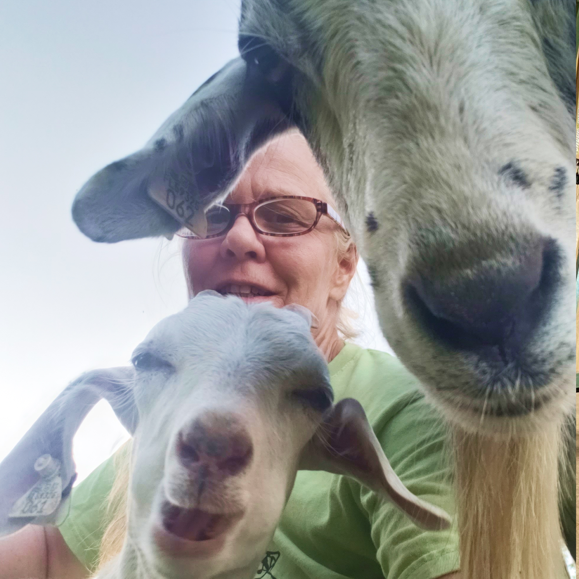Chris with goats